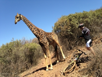 Hotspot Pictures Angry Giraffe Destroys Bike